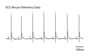 Kaha Mouse telemetry ECG data